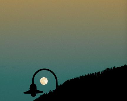 La luna y el tejo / Sylvia Plath
