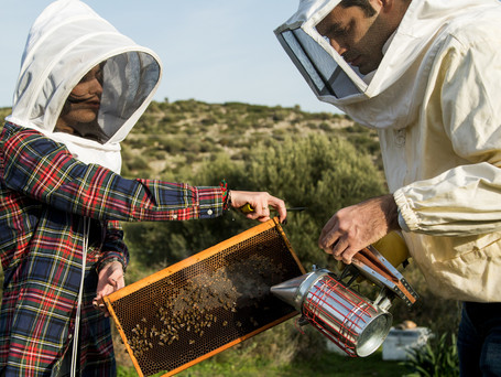 The Success Story of Greek 'Gold' Honey