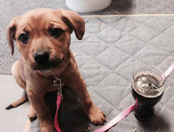 Avery is our brew dog