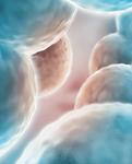 Philomene marseille Adipocytes LPG