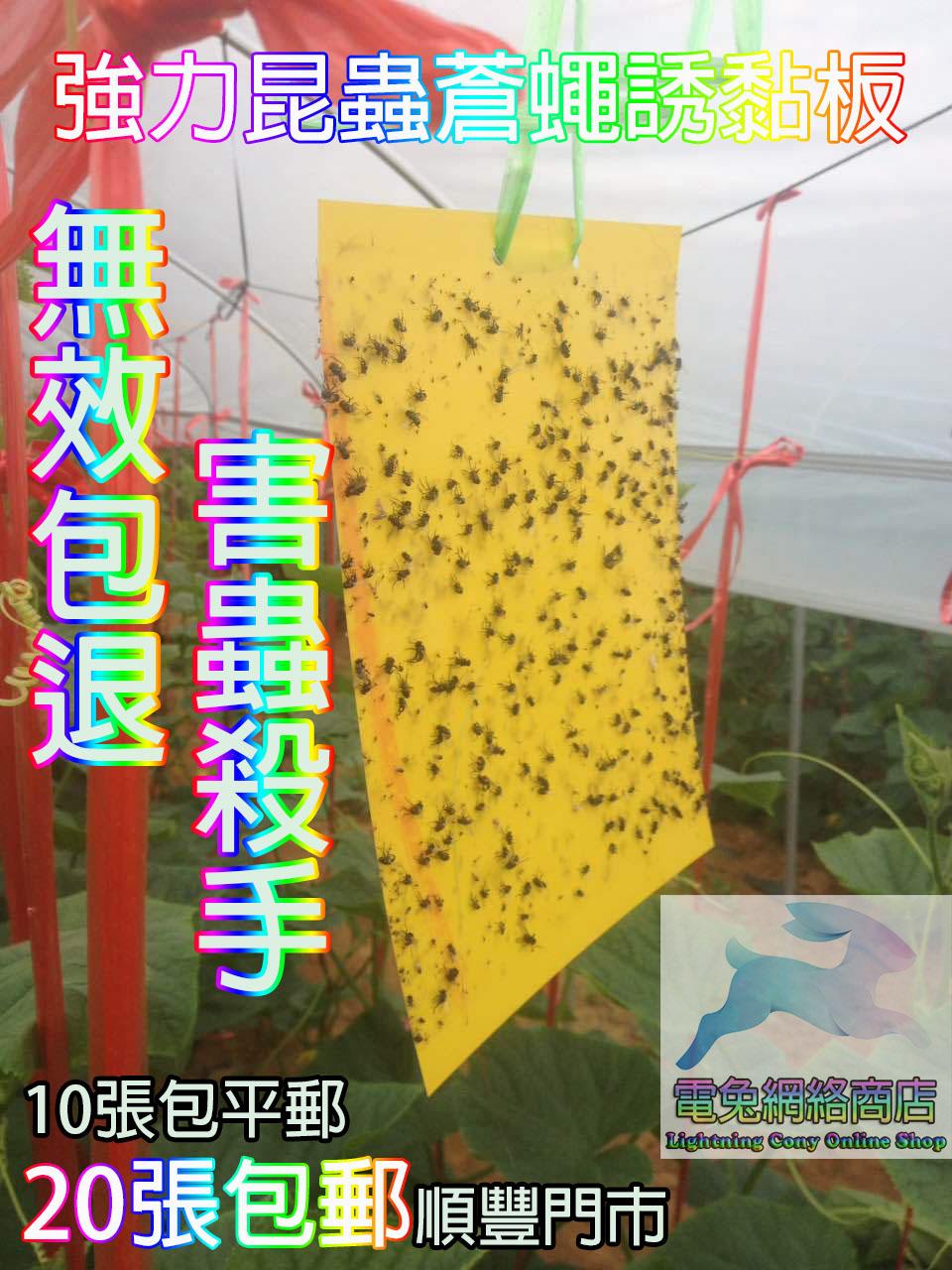 害蟲殺手 強力昆蟲蒼蠅雙面誘黏板 黏蟲貼 驅蟲 除蟲 捕蚊貼 捕蟲貼 捕