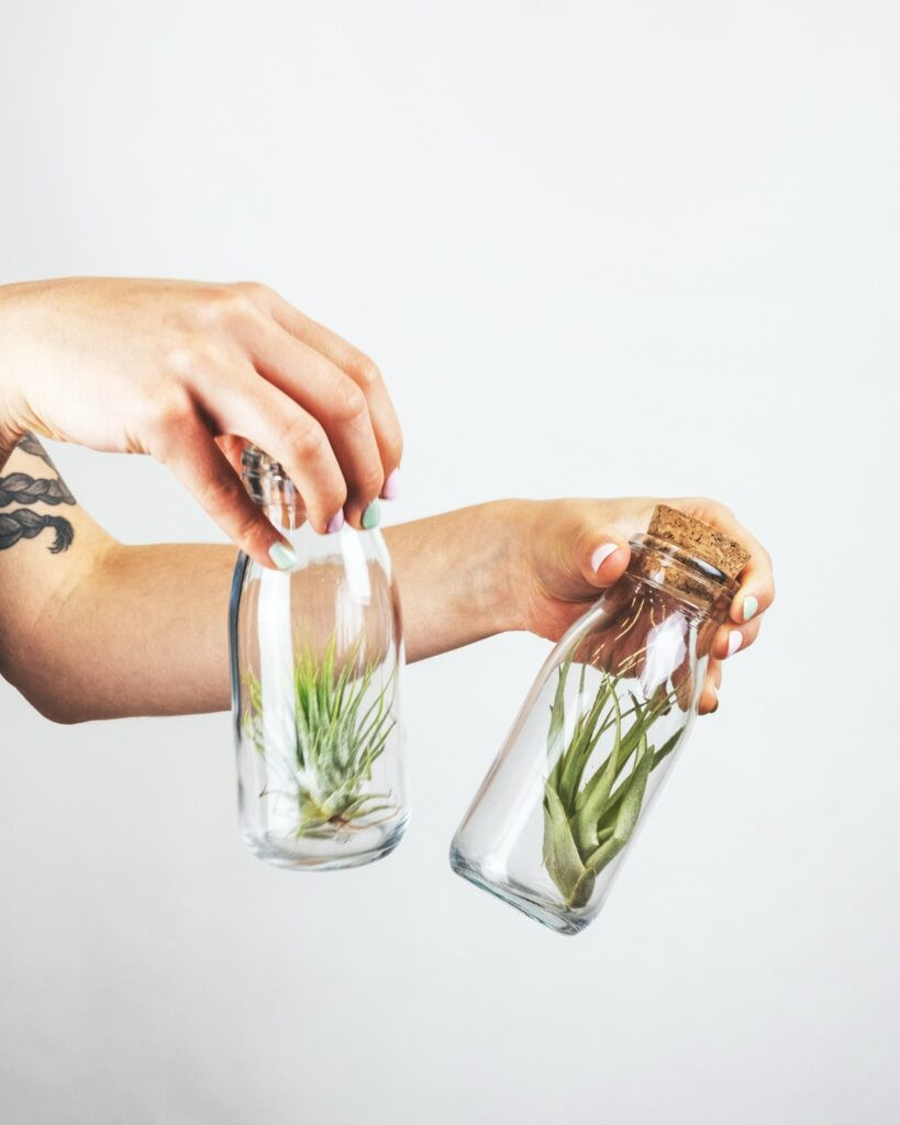 air plant in bottle