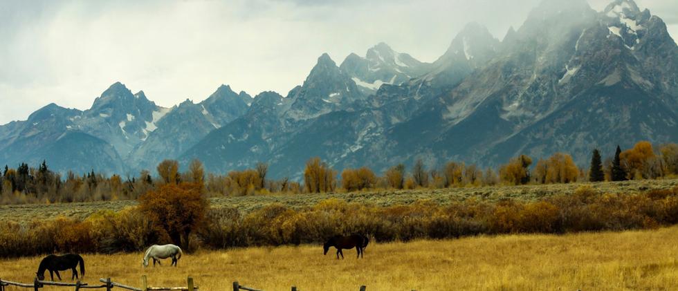 Wyoming Pastures