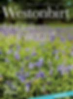 westonbirt spring magazine silkwood bluebells