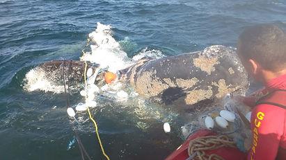 baleia pantano 22082018.jpeg