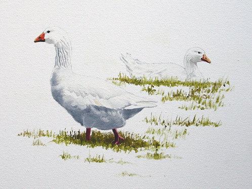 'White Geese', Bodenham Arboretum, Worcestershire