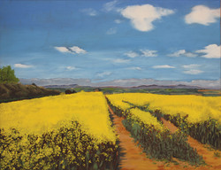The Clee Hills over a rape field