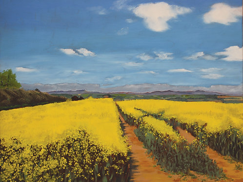 The Clee Hills across yellow rape field