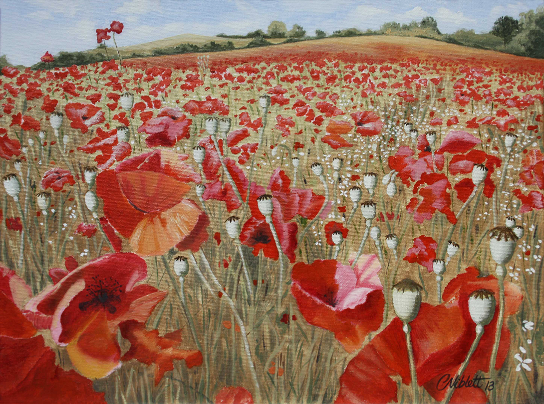 Poppy field - Bewdley