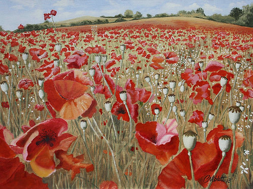 Poppy field, Bewdley, Worcestershire