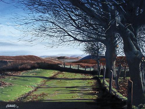 'Winter sun', The Long Mynd, Church Stretton, Shropshire
