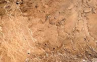 170x115_desert_669_denise_lira_ratinoff.