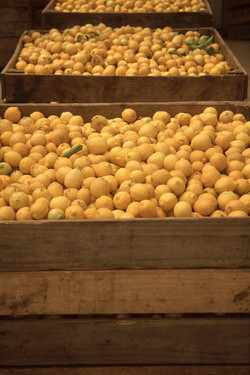 limones_06_edit_crop_700