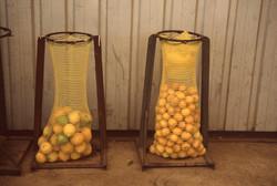 limones_04_edit_crop_700