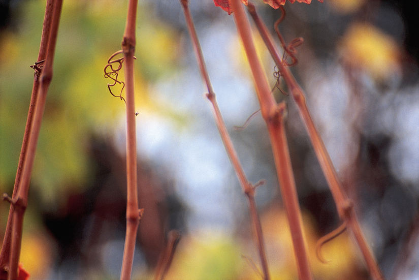fall_56