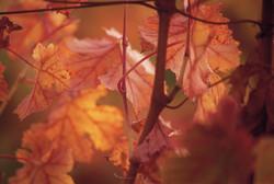 fall_62