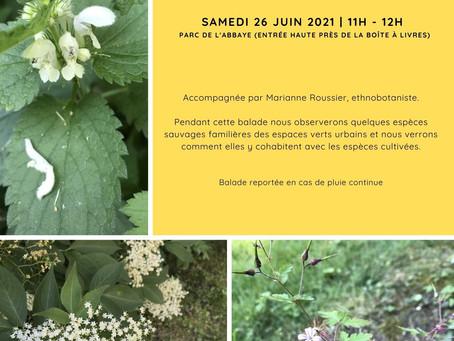 Balade ethnobotanique à la découverte de la flore spontanée au Parc de l'Abbaye