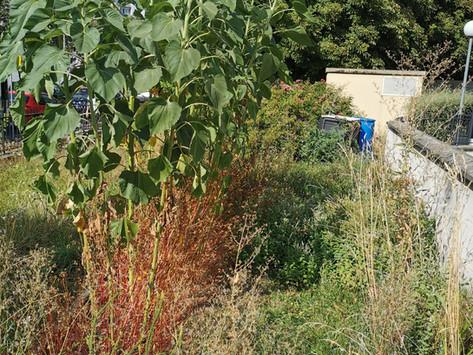 Jardin Ibis après l'été