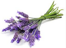 Lavender Essential Oil :One of the best known healing oils, lavender oil has a chemically complex st