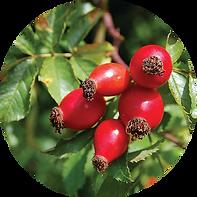 Organic Rosehip Oil Circle.png