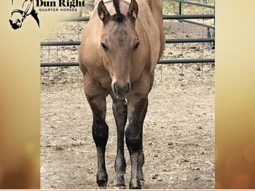 New Dun Colt Listed for Sale!