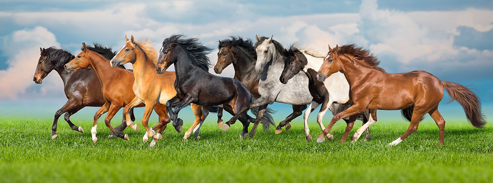 Horses of all colors galloping in pasture