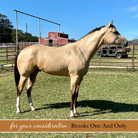 Horses for sale with the ABRA, Inc.