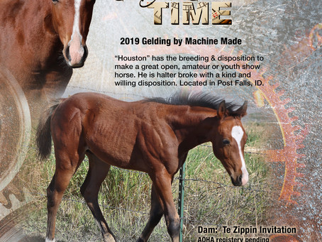 Made It Just In Time - 2019 Bay Gelding for Sale