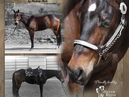 Fantastic AQHA Gelding for Sale by Machine Made!