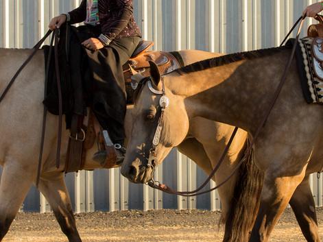 ABRA Horse Showing in the U.S.