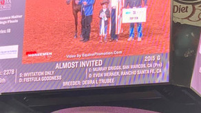 World Show Placings: 5th Place Level 2 Open Performance Geldings - Murray Griggs