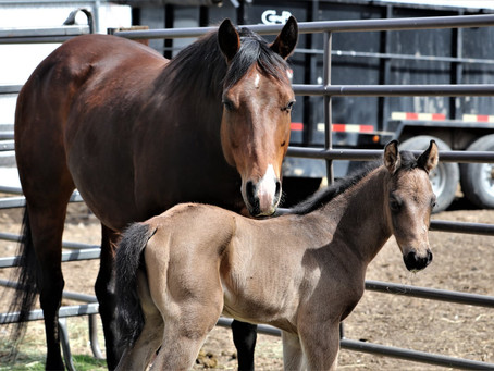 2021 Filly by Dun Goin Steady Arrives!