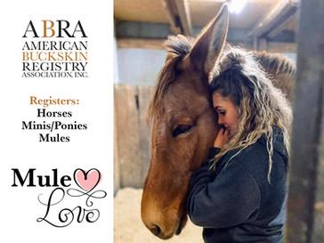Mule Love at the ABRA!