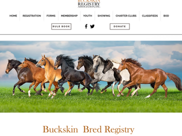 ⭐ Buckskin Bred Program ⭐ (horses ineligible for regular registration)