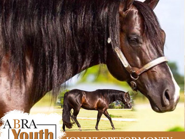 IOnlyLopeForMoney-2021 Stallion for YES Auction at the World Show!