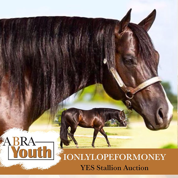 I only lope for money - aqha stallion