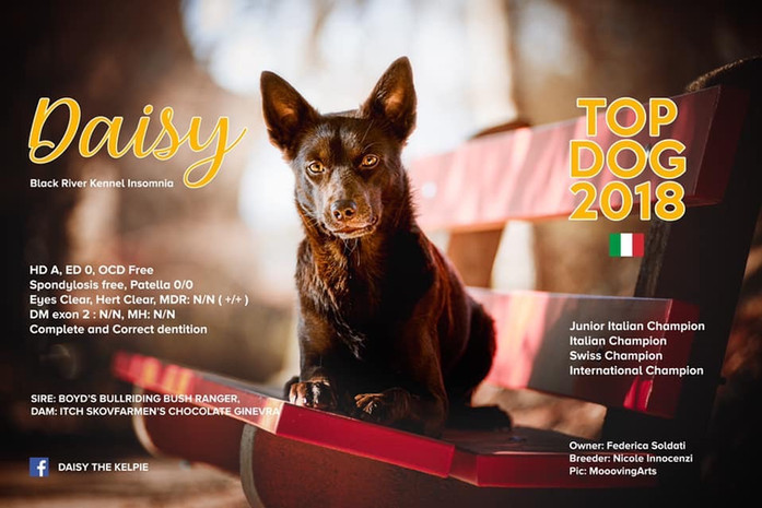 Topd Dog Italy