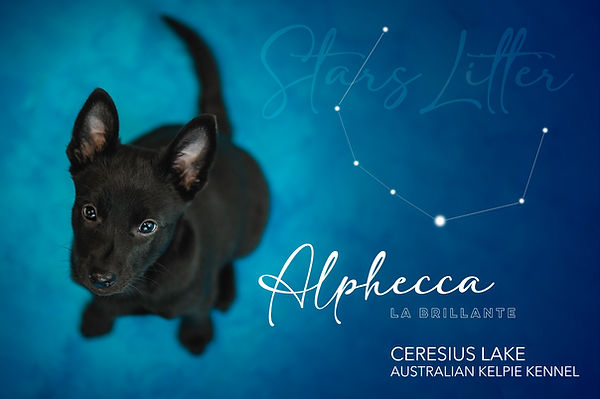 alphecca.jpg
