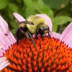 bee (2).jpg