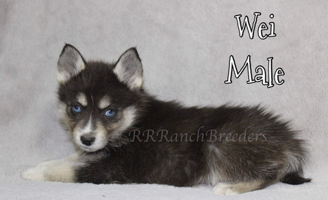 Male $1,800 READY TO COME HOME