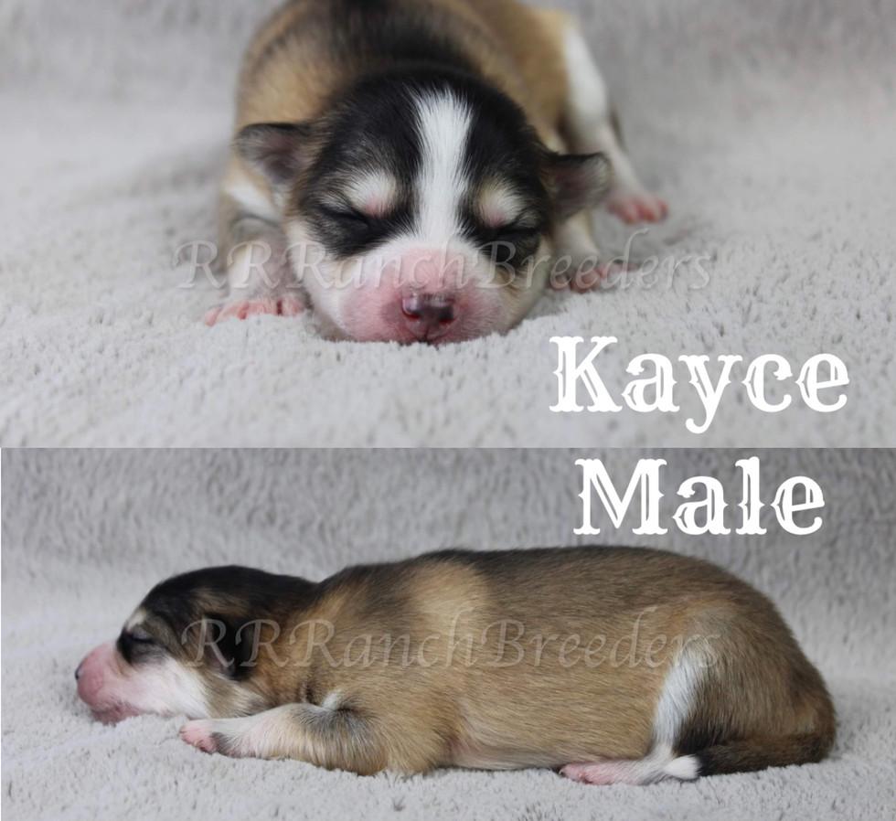 Kayce