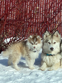 Tamsin, Sawyer and Misty