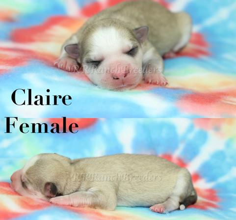Claire $3,500