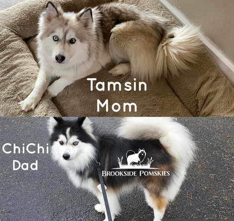 Tamsin and ChiChi