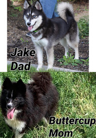 Jake and Buttercup