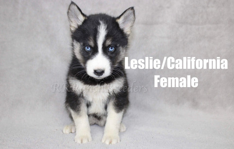 Female $2,500 READY TO COME HOME NOW