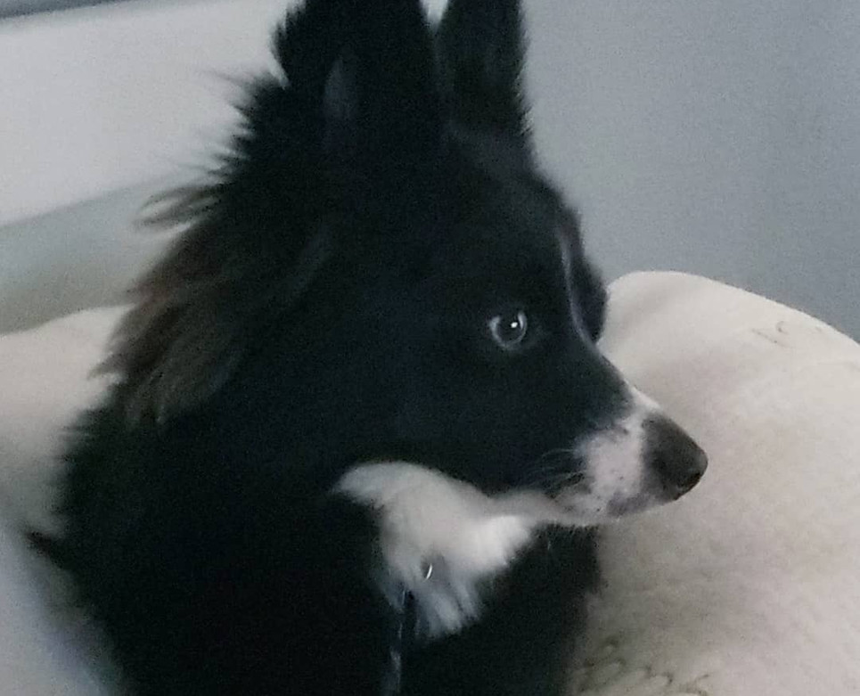 Luna (formerly Bo) (Anna x Jake)
