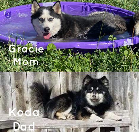 Gracie and Koda