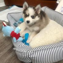 Loki (FKA Jim)