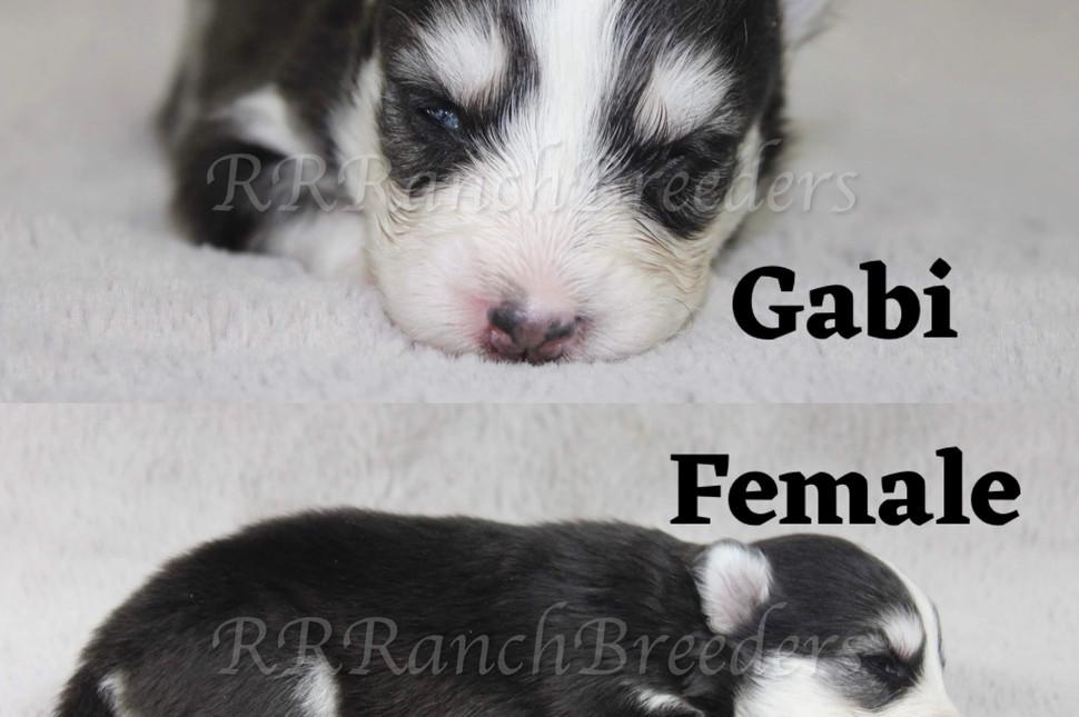 Gabi Female